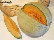 10 Samen Cantaloupe Melone Bonsai