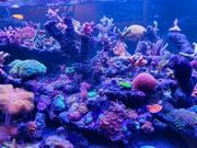 Meerwasser Eingefahren und Osmosewasser