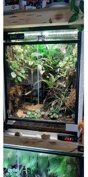 Dendrobaten Terrarium Regenwald