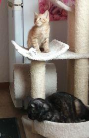 Kätzchen 1 Kleines Mädchen und