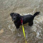 Herzenshund Tommy sucht seine Menschen