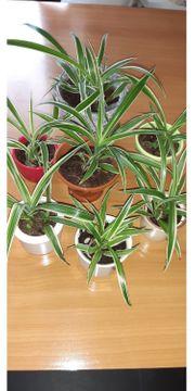 schöne Grünpflanzen