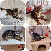 2 Kitten Kater Karlson und