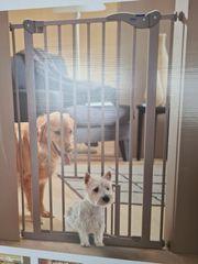 Dog-Door Hundetür mit Katzenklappe