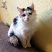 Süßes Katzenmädchen Maisie sucht ihre