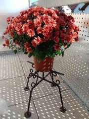 Schmiedeeisengestell mit Blumen