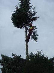 Baumpflege Kronenschnitt Baumfällung mit Seilklettertechnik