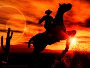Pachtmöglichkeit Weide Paddockbox Pferdehaltung