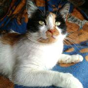 Katzendame Toya ist bereit für