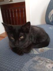 Schwarzer Tiger --- 13 Wochen