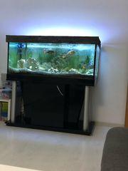 Aquarium mit Fische und Zubehör