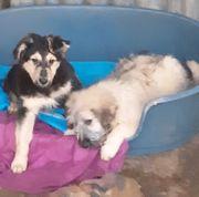 Nette Hundekids suchen Zuhause -