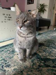 Alexandra 2J verschmuste liebe Katze