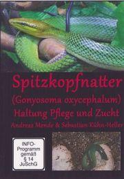 Spitzkopfnatter Gonyosoma oxycephalum Haltung Pflege