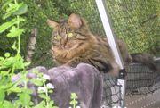 Katzen- und Kleintierbetreuung 70563 Stuttgart