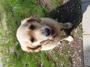 Biete liebevolle und zuverlässige Hundebetreuung