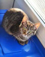 Betsy Katze aus dem Tierschutz
