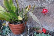 Aloe Pflanzen und Schmuck-Kakteen Ableger