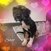 Saco und Socke ca 8