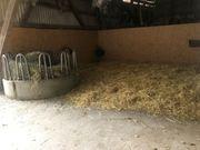 Pferdeboxen sowie Offenstallplätze