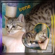 Baby Katze Kitten Irene geimpft