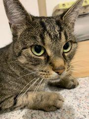 Katze Bonnie sucht neues Zuhause