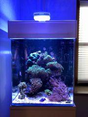 Meerwasseraquarium komplett 60L mit viel