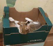 Maca-7 Jahre tolle Begleit-Katze sucht