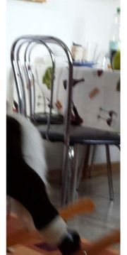 Stühle aus Metall 4 mal