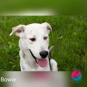 Bowie - ein wunderschöner Husky-Mix