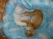 13 Katzenbabys und Maikätzchen verspielt