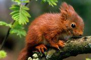 Eichhörnchen Hilfe