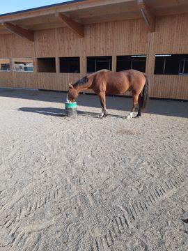 Pferdeboxen, Stellplätze - HIT Aktivstall Einstellplätze