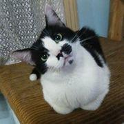 Katze Sunny ist bereit für