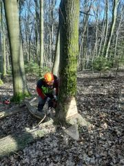 Forstwirtschaftliche Arbeiten