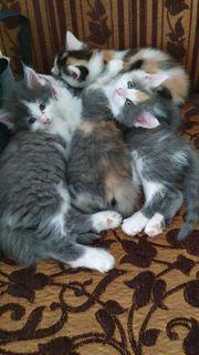 Mix Baby Katzen