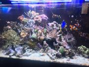 Meerwasseraquarium Meerwasserbecken Aquarium Eckbecken