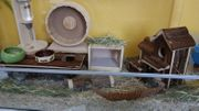 Hamster Zubehör Terrarium Hamstarium