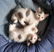 5 süße Kätzchen suchen neues