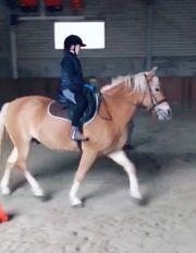 Pferd für Reitbeteiligung gesucht