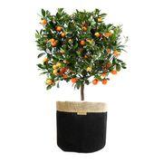 Ökologische Blumentopftasche für größere Pflanzen
