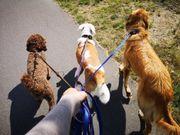 familiäre professionelle Hundepension Hundebetreuung
