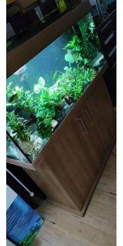 eheim Aquarium vivaline 240 in