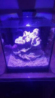 Nano Meerwasser Aquarium 8L inkl