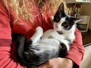 Enisa Katze aus dem Tierschutz