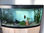 Aquarium mit Diskus Fischen abzugeben