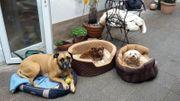 Tierbetreuung - Hundebetreuung - Hundepension - Tierpension
