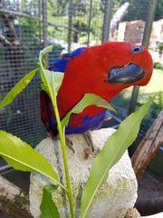 Suche Papageien Küken zur weiteren