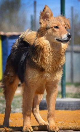 Hunde - ANEZKA - ganz lieb auch noch