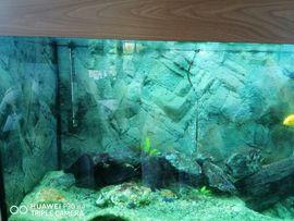 Aquarium mit Fischen: Kleinanzeigen aus Kronach - Rubrik Fische, Aquaristik